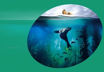 Blue Planet II Live In Concert Auckland