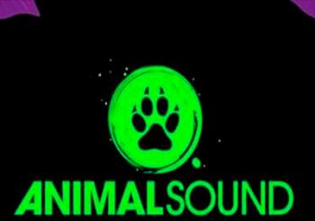 Concierto Animal Sound Festival 2019 en Murcia